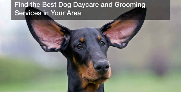 Find the Best Dog Daycare and Grooming Services in Your Area