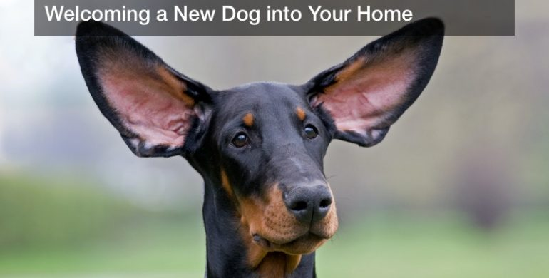 Welcoming a New Dog into Your Home