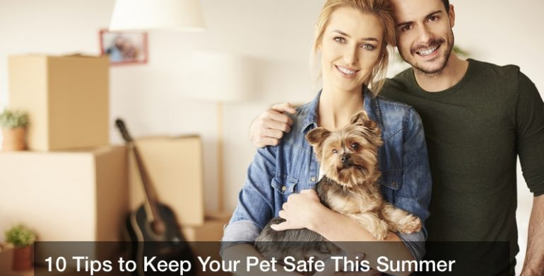 10 Tips to Keep Your Pet Safe This Summer